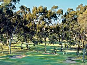 Tanunda Pines Golf Club - Restaurants Sydney